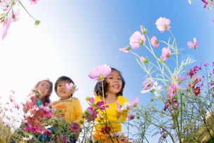 お花畑で遊ぶ子供達の写真素材 [FYI03241311]