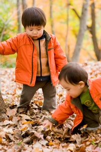 枯葉で遊ぶ子供達の写真素材 [FYI03241318]