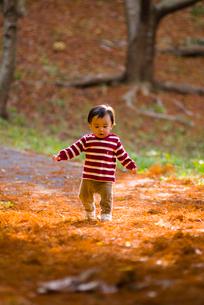 秋の公園で遊ぶ赤ちゃん達の写真素材 [FYI03241372]
