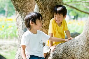 木の幹に座る男の子の写真素材 [FYI03241469]