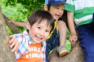 木の枝に座る男の子の写真素材 [FYI03241483]