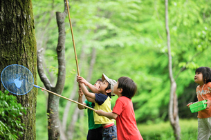 虫取りをする子どもたちの写真素材 [FYI03241513]