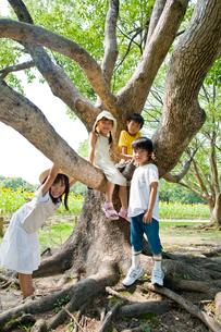 大樹と子供達の写真素材 [FYI03241515]