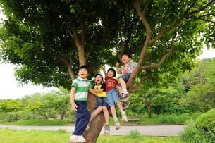木に登る男の子と女の子達の写真素材 [FYI03241522]