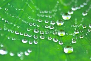 水滴のついたくもの巣の写真素材 [FYI03241942]