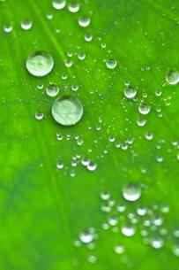 葉の上についた水滴の写真素材 [FYI03241946]