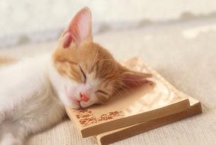 本を枕にする子猫の写真素材 [FYI03242201]