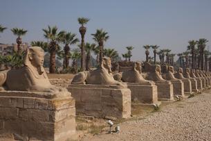 ルクソール神殿 スフィンクス参道の写真素材 [FYI03243077]