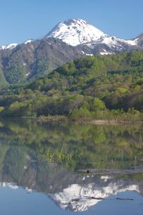乙見湖と新緑と残雪の山の写真素材 [FYI03243198]