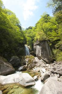 新緑の不動滝 尾白川渓谷の写真素材 [FYI03243240]