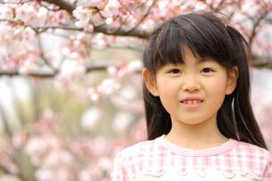 桜の前に立つ女の子の写真素材 [FYI03243779]