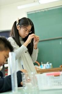 実験道具を作っている小学生の写真素材 [FYI03243916]
