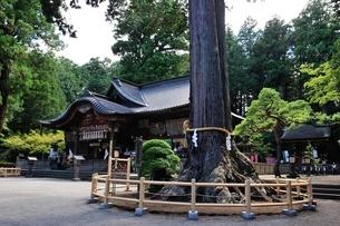 北口本宮冨士浅間神社の夫婦桧と本殿の写真素材 [FYI03243991]