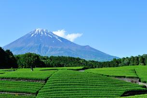 富士市大渕笹場より見た茶畑と富士山の写真素材 [FYI03243992]