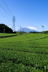 富士市より見た茶畑と富士山の写真素材 [FYI03244027]