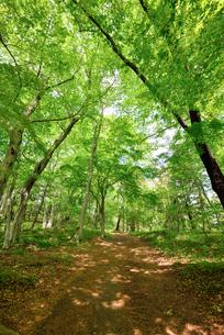 新緑の頃のハイキング道の写真素材 [FYI03244042]