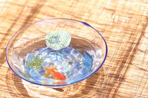 水鉢と金魚の写真素材 [FYI03244588]