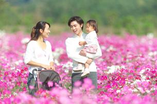 コスモス畑で遊ぶ家族の写真素材 [FYI03244636]