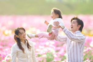 コスモス畑で遊ぶ家族の写真素材 [FYI03244639]