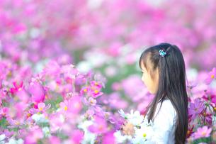 コスモス畑で遊ぶ女の子の写真素材 [FYI03244651]