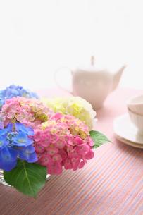 紫陽花とティーポットの写真素材 [FYI03244928]