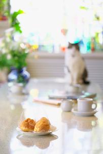 リビングのテーブルに置いたシュークリームと猫の写真素材 [FYI03244937]
