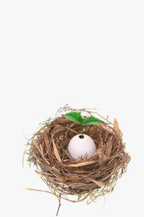 鳥の巣と卵の殻から発芽した双葉の写真素材 [FYI03244940]