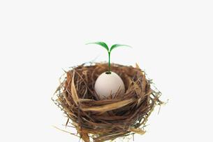 鳥の巣と卵の殻から発芽した双葉の写真素材 [FYI03244941]