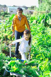 家庭菜園の収穫を手伝う子供の写真素材 [FYI03244964]