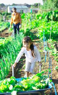 家庭菜園の収穫を手伝う子供の写真素材 [FYI03244972]
