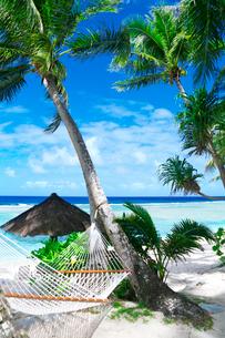 青い海とヤシの木とハンモックの写真素材 [FYI03245147]