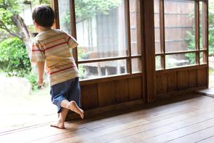 縁側へ飛び出す男の子の写真素材 [FYI03246502]