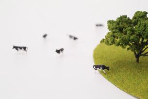 牧場と牛の写真素材 [FYI03246573]