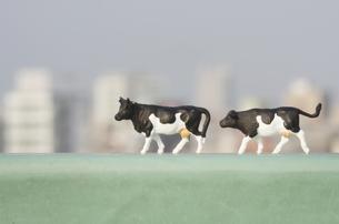 ビルとミニチュア牛の写真素材 [FYI03246584]