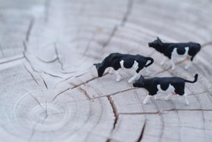 木の年輪とミニチュア牛の写真素材 [FYI03246589]