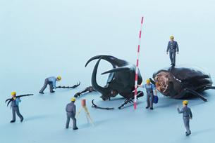 カブトムシを計測する人の写真素材 [FYI03246632]