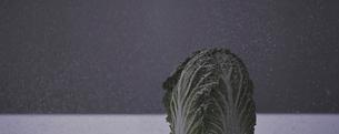 雪の中の白菜の写真素材 [FYI03246660]
