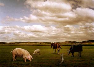 草原にいる動物たちの写真素材 [FYI03246671]