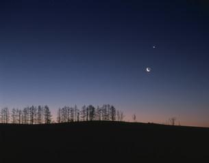朝焼けの木立と三日月の写真素材 [FYI03246729]