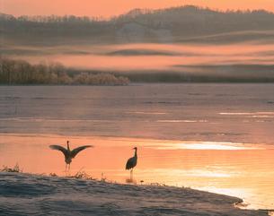 朝焼けの塘路湖とタンチョウ 釧路湿原の写真素材 [FYI03246788]
