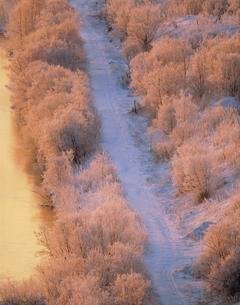 朝日に光る霧氷と道の写真素材 [FYI03246846]