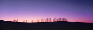 朝焼けと立木と三日月の写真素材 [FYI03246972]