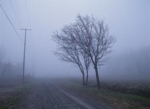霧の道路の写真素材 [FYI03247036]