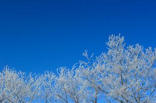 霧氷と樹氷の写真素材 [FYI03247311]