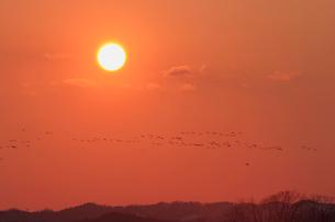 夕日とマガンの写真素材 [FYI03247451]