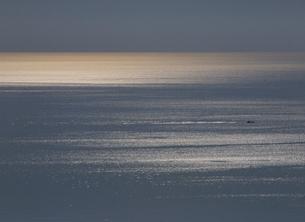 光る海と水平線と漁船 日本海の写真素材 [FYI03247776]