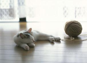 猫の写真素材 [FYI03248149]