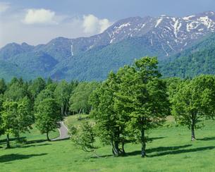残雪の黒姫山と笹ケ峰 妙高高原より望むの写真素材 [FYI03248206]