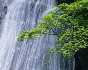 新緑のそうめん滝の写真素材 [FYI03248231]