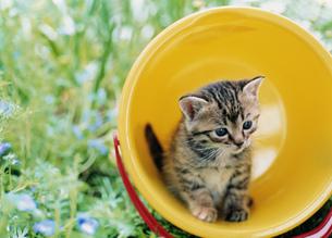 庭先の黄色いバケツとネコの写真素材 [FYI03248328]